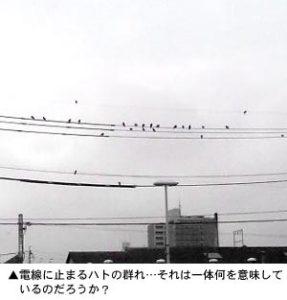 電線に止まるハトの群れ